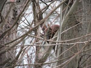 Eichhörnchen_Die kleine Fachwerk-Kate (3)