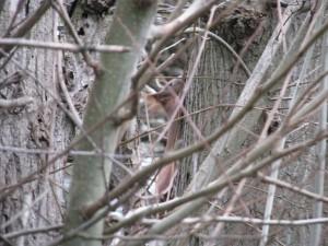 Eichhörnchen_Die kleine Fachwerk-Kate (4)
