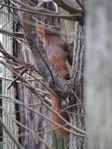 Eichhörnchen_Die kleine Fachwerk-Kate (5)